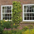 uPVC Windows Hertfordshire